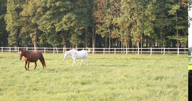 parc à chevaux château d'Ancy le Franc